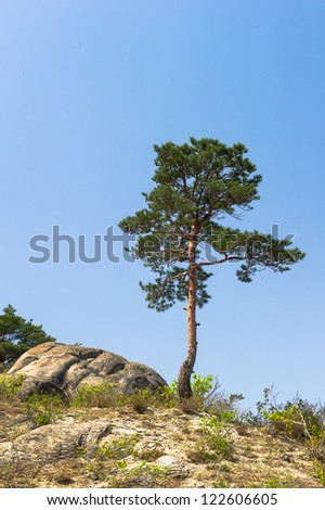 Tree on the top of the Mount Kumgang in Kangwon-do, North Korea.