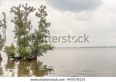 Tree on the water  - stock photo