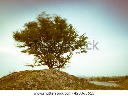 Tree on top hill in sun set time
