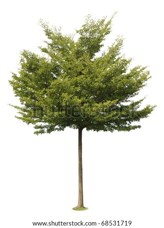 tree on white background