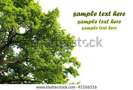 tree on white background with room for text - stock photo