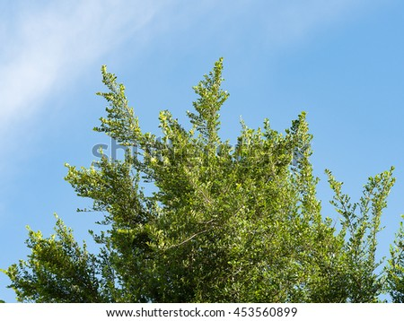 Tree. Perspective unique nature green leave view from under big green tree against with blue sky. Natural and environment concept. - stock photo