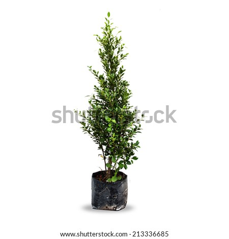 Tree plant in bag isolated on white background. - stock photo