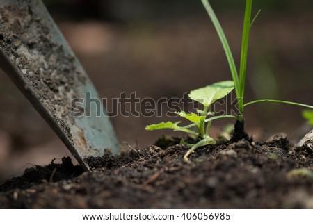 Tree planting - stock photo