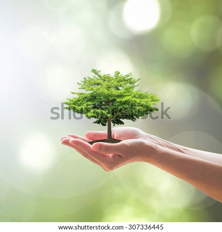 Tree planting on female human hands with blurred natural green leaves bokeh background with light flare: Human hands saving big tree: Environment/ land/ ecosystem preservation creative concept/ idea - stock photo