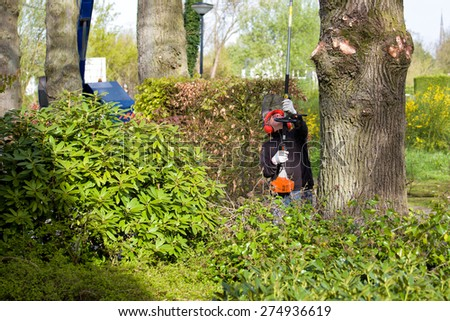 Tree pruning by a man with a long chainsaw, standing on the ground, working at long distance between the branches of old oak trees - stock photo