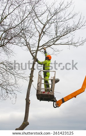Tree pruning with a chainsaw - stock photo