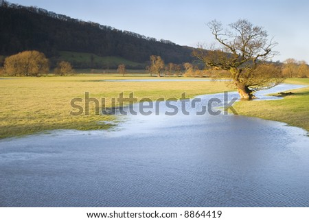 Tree reflected in receding flood water lit by evening sun - stock photo