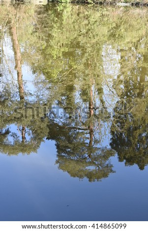 Tree reflection on water