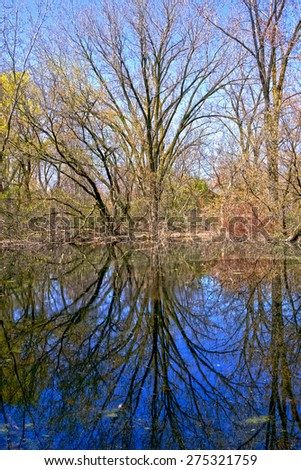 Tree reflections in a pond - stock photo