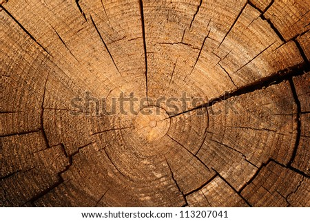 Tree ring background - stock photo