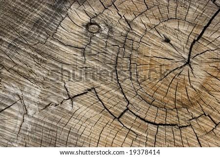 Tree Ring Background - stock photo