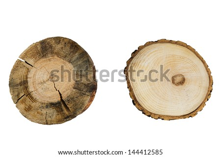tree rings close up isolated on white background - stock photo