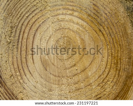 tree rings for use as texture or background material - stock photo