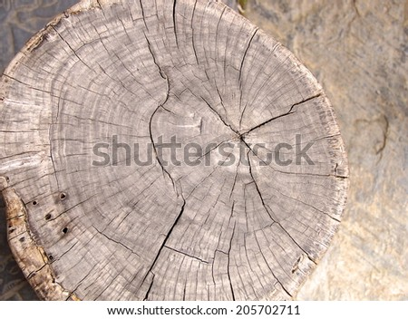 Tree rings to count the age of a tree