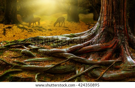 tree roots and forest