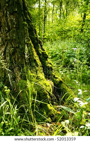 Tree, roots covered in moss #2 - stock photo
