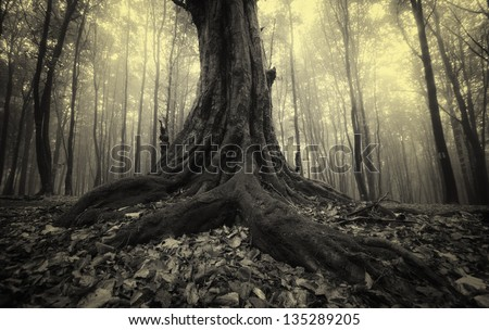 tree roots in a foggy dark forest vintage photo - stock photo