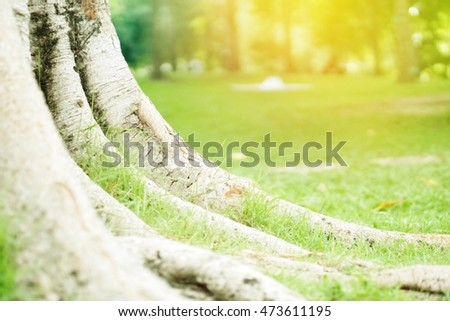 tree roots in spring garden with sunlight morning nature background