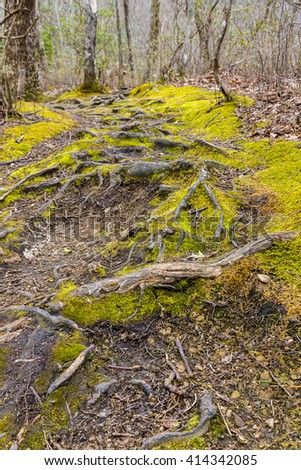 Tree roots on the footpath in forest of Great Smoky Mountains National Park. - stock photo
