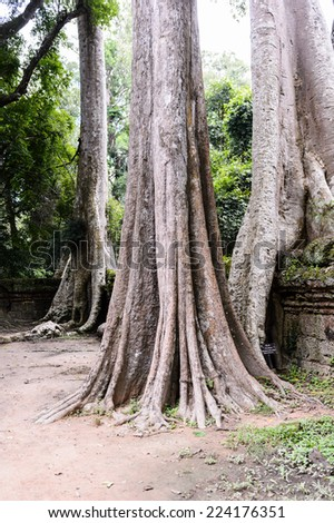 Tree roots over the Ta Prohm (Rajavihara), a temple at Angkor, Province, Cambodia. It was founded by the Khmer King Jayavarman VII as a Mahayana Buddhist monastery and university. - stock photo