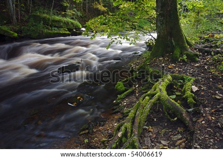 Tree roots River flowing among tree roots in a forest - stock photo
