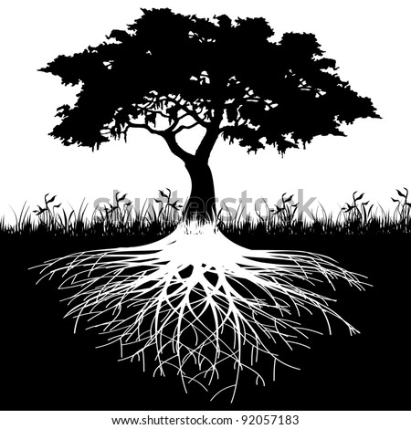 Tree roots silhouette - stock photo