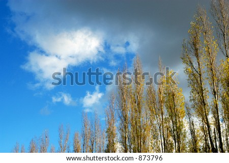 Tree's and clouds - stock photo