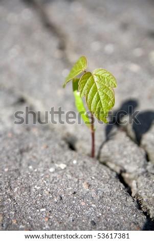 Tree's sprout push through asphalt - stock photo