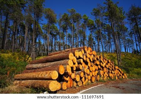 Tree sacrifice - stock photo
