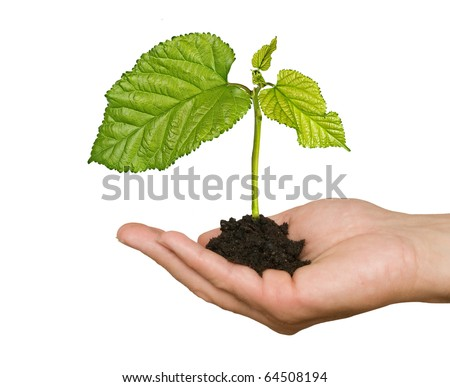 Tree seedling in hand - stock photo