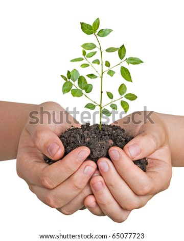 Tree seedling in hands - stock photo