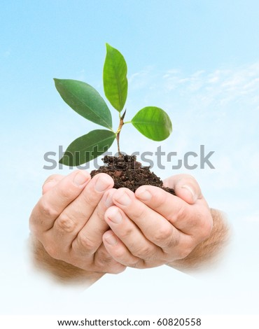 tree seedling in hands as a symbol of nature protection