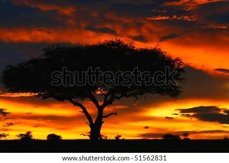 Tree shade and dramatic sunset. Africa. Kenya. Masai Mara. - stock photo