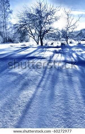 tree shadow - stock photo