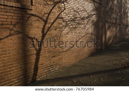 tree shadow on brick - stock photo