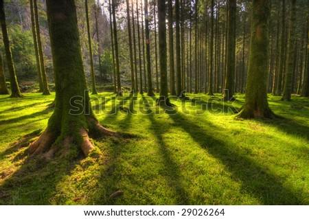 tree shadows - stock photo