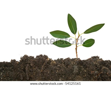 Tree shoot in soil  on  white background