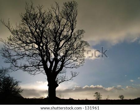 Tree Silhouette - stock photo