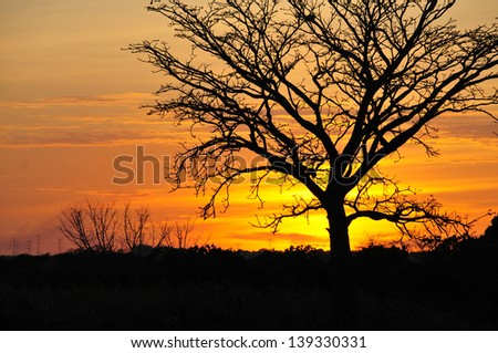 Tree silhouette against a beautiful Sunset