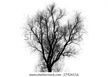 tree silhouette against white background - stock photo