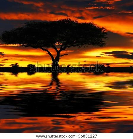 Tree silhouette and dramatic sunset. Africa. Kenya. Masai Mara. - stock photo