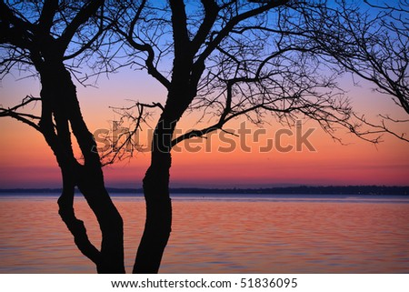 Tree Silhouette at Dusk - stock photo