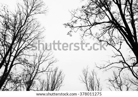 tree silhouette black and white - stock photo