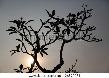tree silhouette black and white landscape - stock photo