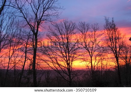 Tree silhouette in a forest at sunset