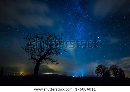 Tree silhouette in a starry night - stock photo