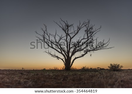 tree silhouette in the Australian outback - stock photo