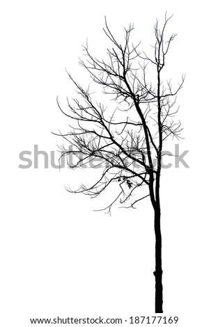 tree silhouette isolated on white - stock photo