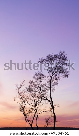 Tree silhouette on a beautiful sunset background - stock photo